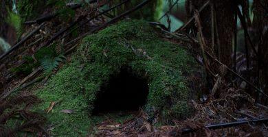 La Cueva Historia Real